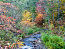 Autumn Foliage. By a stream in Whetstone State Park, New York Stock Image