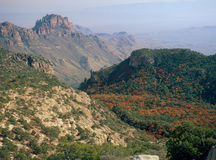 Autumn foliage from the summit of Emory Peak, Big Bend National park, Texas Royalty Free Stock Photography