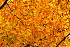 Autumn foliage at sunny day Royalty Free Stock Photography