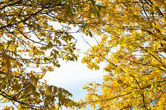 Autumn foliage at sunny day Royalty Free Stock Images
