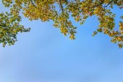 Autumn Foliage sur le fond de ciel Photos stock