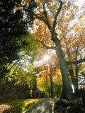 Autumn Foliage sur une colline avec la voie Photographie stock libre de droits