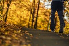 Autumn Foliage Trail Walk imagem de stock royalty free