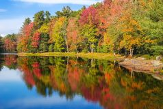 Autumn foliage tree reflections in pond. Colorful foliage tree reflections in pond water on a sunny autumn day in New England Stock Photos