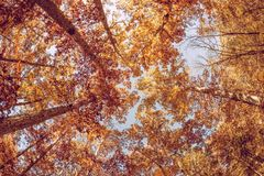 Autumn foliage tree tops Stock Photos