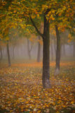 Autumn foliage, trees and fog Stock Photo