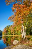 Autumn foliage trees by a lake in New England. On a sunny fall day royalty free stock image