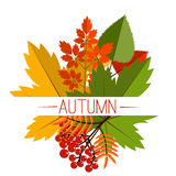 Autumn foliage vector banner. Autumn typographical. Background with autumn leaves. Autumn typographic. Fall leaf.  Autumn sale vector banner Royalty Free Stock Photo