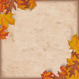 Autumn Foliage Vintage Stock Images