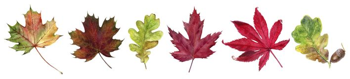 Autumn foliage watercolor isolated on white background