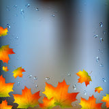 Autumn foliage on wet window Stock Photography