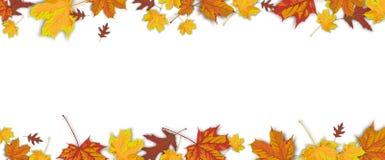 Autumn Foliage White Centre Header Royalty Free Stock Photography