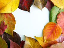 Autumn foliage on white Stock Photo