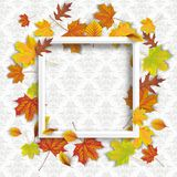 Autumn Foliage White Frame Ornaments Wallpaper. Autumn foliage with white frame aon the wallpaper with ornaments Royalty Free Stock Photography