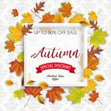 Autumn Discount Foliage White Frame Ornaments Wallpaper. Autumn foliage with white frame on the wallpaper with ornaments Stock Image