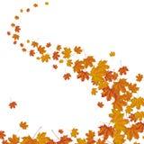 Autumn Foliage Wind. Maple foliage on the white background Royalty Free Stock Photo