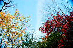 Autumn Foliage With The Blue Sky. Royalty Free Stock Photography