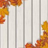 Autumn Foliage Wood stock illustrationer