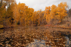 Autumn Folliage Reflected in Lake Stock Photography