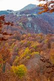 Autumn folliage. Vibrant colors of autumn have paint this picturesque forest scenery stock image