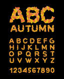 Autumn font. Yellow leaves of alphabet. autumnal ABC.. Autumn font. Yellow leaves of alphabet. autumnal ABC. Letters of fallen leaves Stock Photo