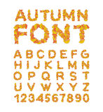 Autumn font. Yellow leaves of alphabet. autumnal ABC.. Autumn font. Yellow leaves of alphabet. autumnal ABC. Letters of fallen leaves Royalty Free Stock Photography