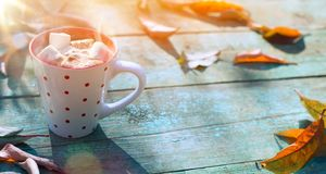 Autumn food background; cup of cocoa with marshmallow stock image