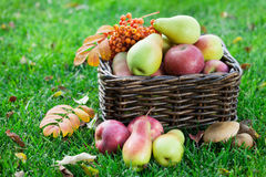 Autumn food Royalty Free Stock Photography