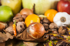 Autumn food mix Royalty Free Stock Images