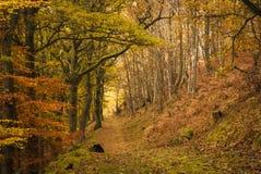 Autumn Footpath imágenes de archivo libres de regalías