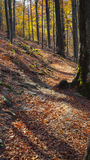 Autumn footpath. A footpath in autumn in the forest in Central Balkan National Park Royalty Free Stock Image