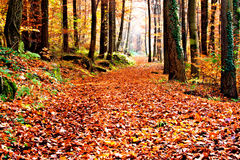 Autumn footpath Royalty Free Stock Photography