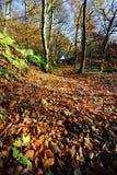Autumn Footpath fotografia stock libera da diritti