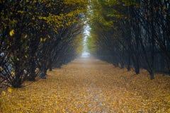 Autumn Footpath foto de archivo