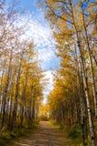 Autumn Footpath Foto de Stock