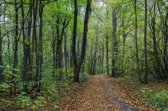 Autumn by the footpath. View from a footpath with autumn colors in a forest stock photos