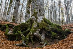 Autumn in Forca D`Acero, Abruzzo National Park, Italy royalty free stock photography