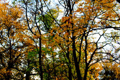 Autumn Fores Image stock