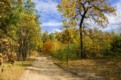 Autumn fores royalty free stock photography
