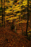 Autumn in the forest. In Giant mountains stock photo