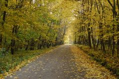 Autumn forest. Russia. Moscow area stock image