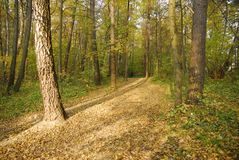 Autumn forest. Solar autumn day in a forest royalty free stock images