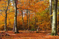 Autumn forest. Vibrant image of autumn forest at sunset Stock Photo