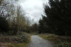 2 autumn forest Στοκ φωτογραφία με δικαίωμα ελεύθερης χρήσης