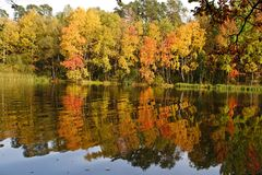 Autumn forest. Reflected on the water Royalty Free Stock Images