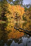 Autumn forest. Reflected on the water Stock Photos