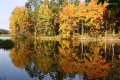 Autumn forest. Reflected on the water Royalty Free Stock Photography