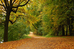 Autumn forest. Peaceful path in the autumn forest Stock Image