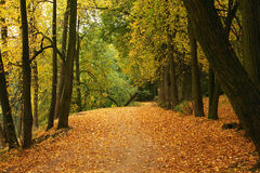 Autumn forest. Peaceful path in the autumn forest Royalty Free Stock Photos