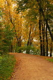 Autumn forest. Peaceful path in the autumn forest Royalty Free Stock Images
